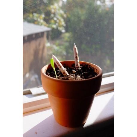Sprout Scuola - Si cresce anche grazie ai Prof e il suo aiuto è stato prezioso!