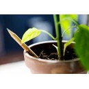 OFFERTA KIT - Sprout, la matita che si pianta.